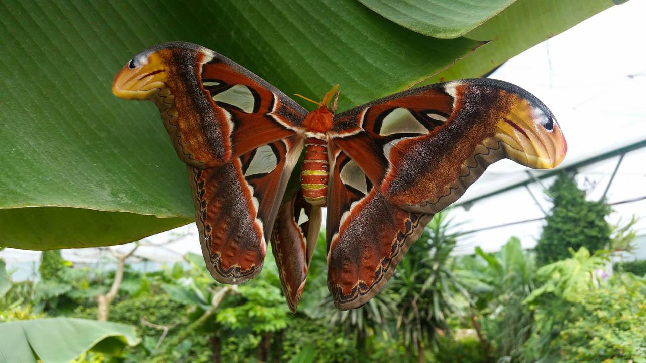 Farfalle: L'Oasi Delle Farfalle